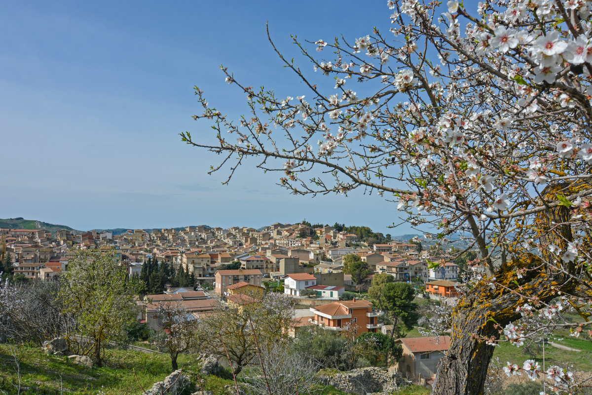 DSC_7322 Montedoro Panoramica